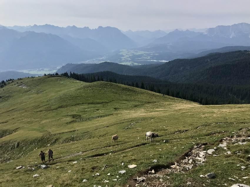 Simetsberg wandern - unterhalb des Gipfels mit Blick zum Karwendel und Wettersteingebirge