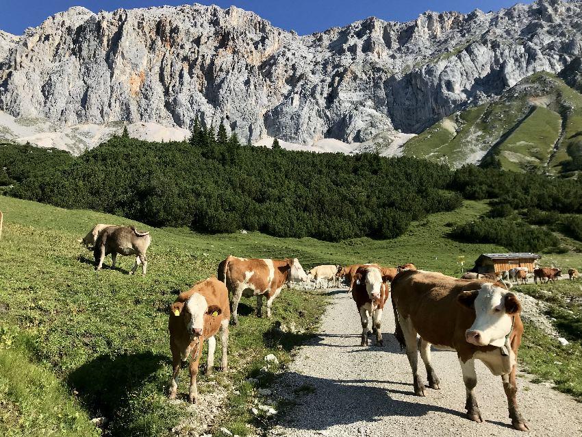 Ein Traum: Die Almlandschaft rund um das Gaistal mit dem Wettersteingebirge