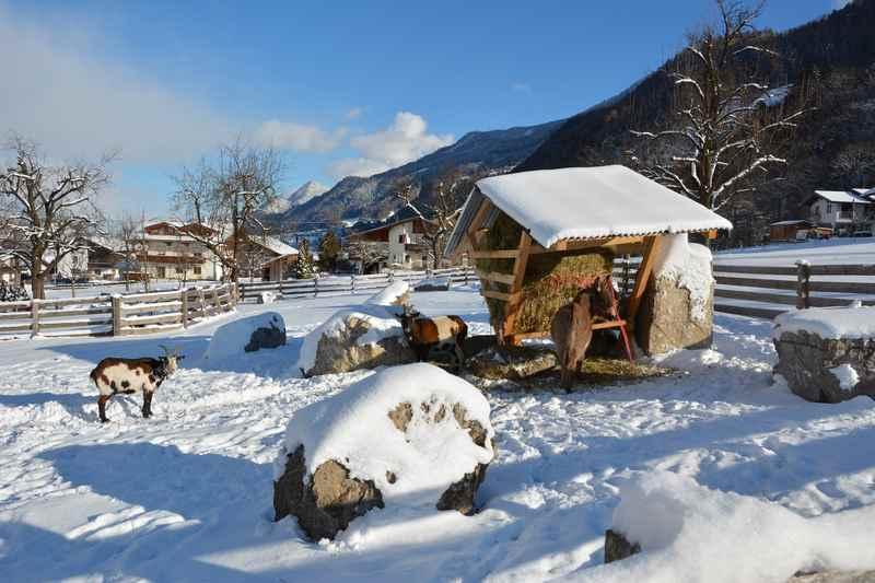 Gleich am Anfang der Winterwanderung finden wir den kleinen Streichelzoo mit Ziege und Esel