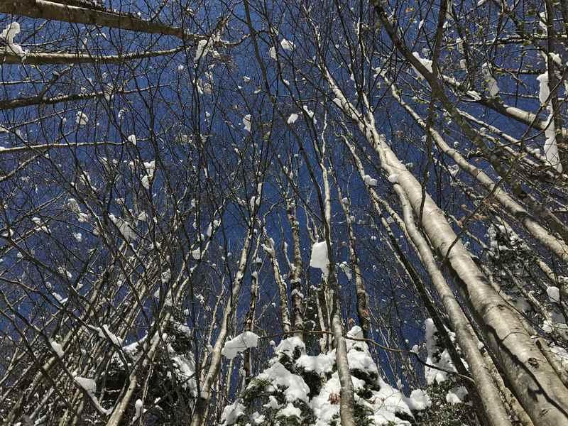 Der Blick zum blauen Himmel beim Schneeschuhwandern am Achensee