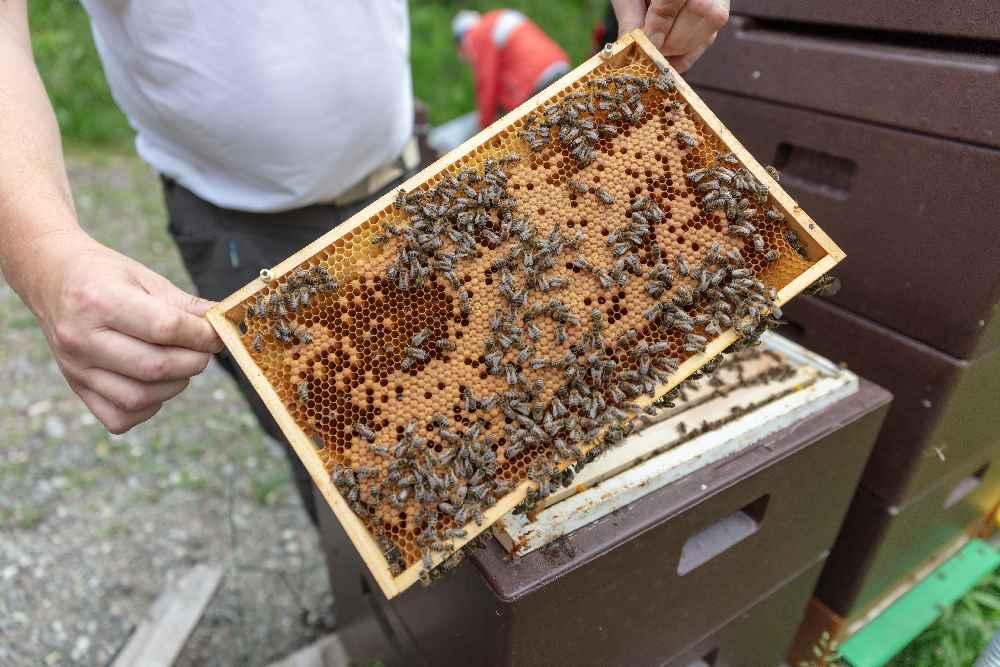 Was macht ein Imker im Winter? - diese Holzrahmen für den Bienenstock bauen. Foto: Albert Unterkircher