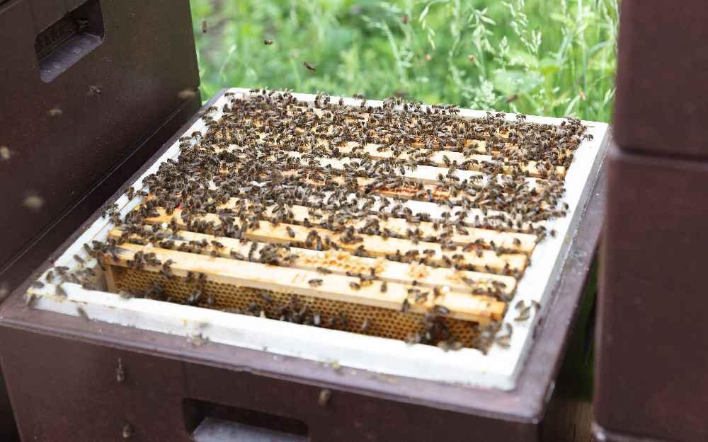 Was tun die Bienen alles für uns Menschen? Antworten liefern die Tiroler Honigtage. Foto: Albert Unterkircher