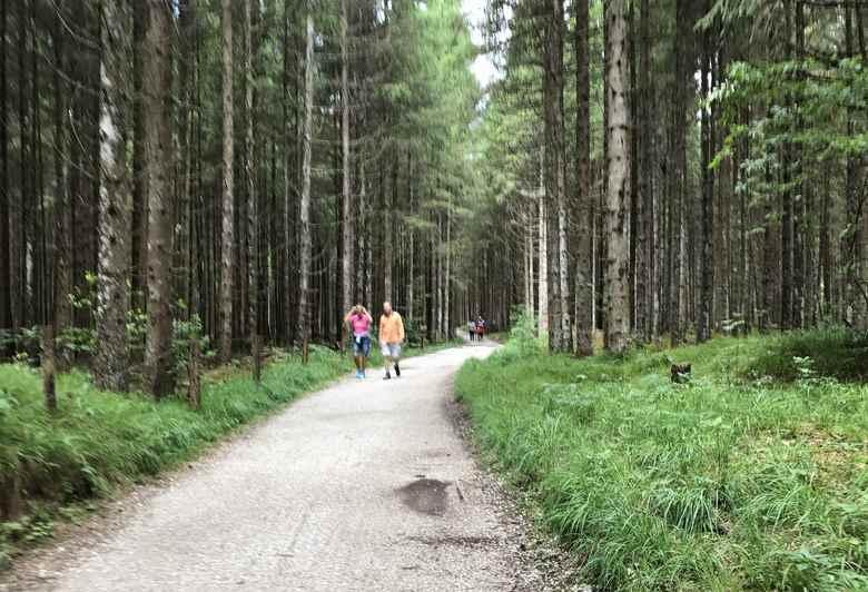 Zuerst noch das Stück durch den Wald wandern...