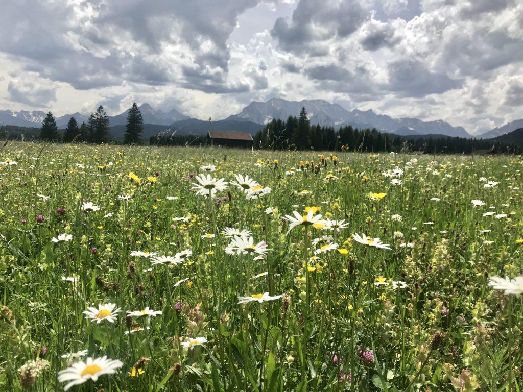 Das sind die Wiesen rund um Wallgau in Bayern - ein Traum oder?