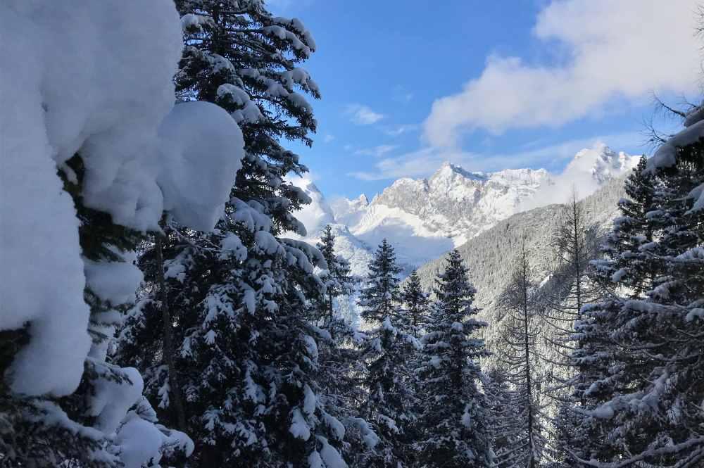 Beim Abstieg vom Hochfluder ins Satteltal tut sich zwischen den verschneiten Bäumen das Wettersteingebirge auf
