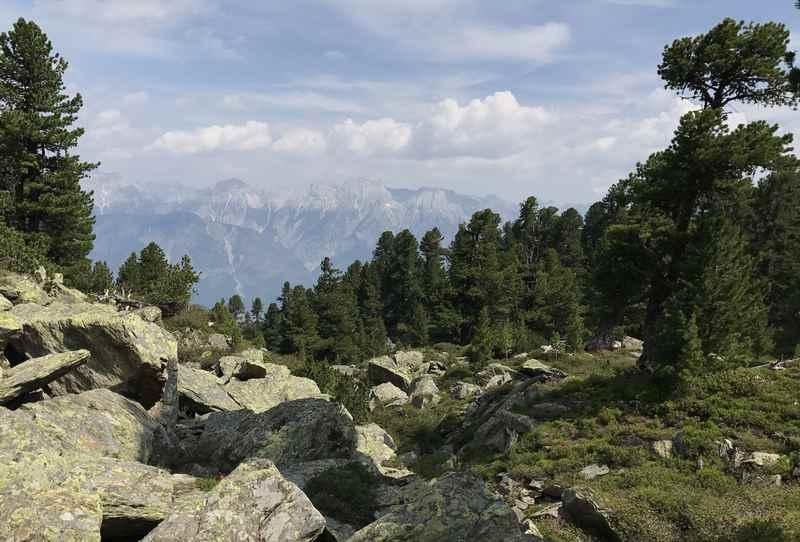 Auf dem Zirbenweg Innsbruck wandern mit meterhohen Zirben und dem Blick zum Karwendel