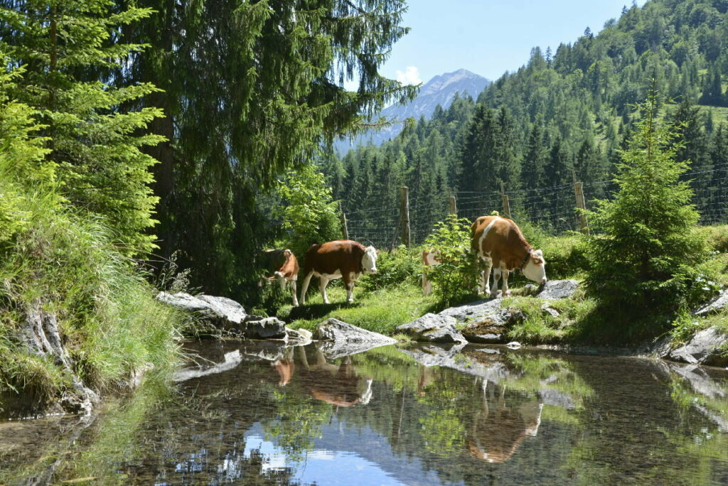 Idyllisch in Achenkirch wandern
