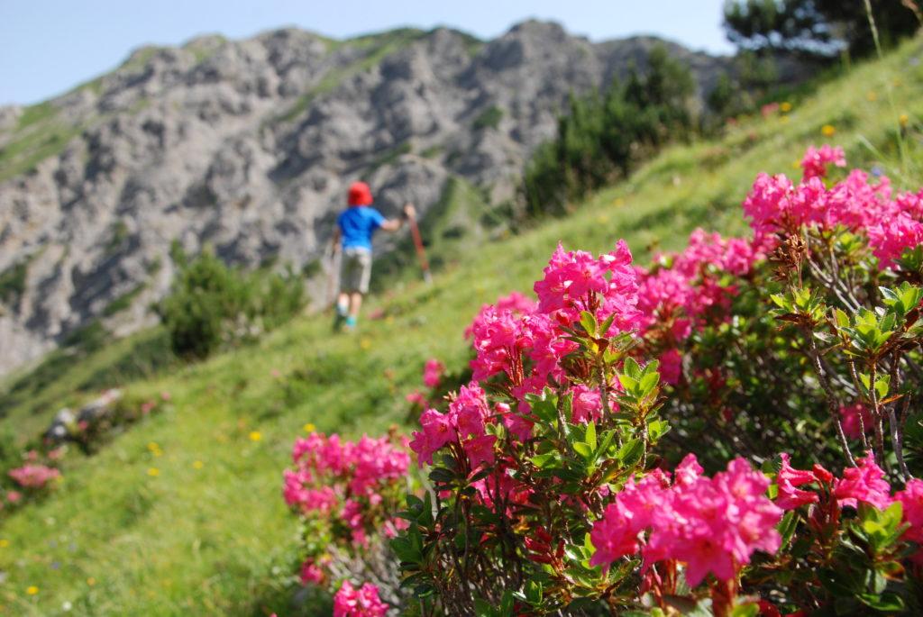 Großer Ahornboden - Almsommer in den Bergen