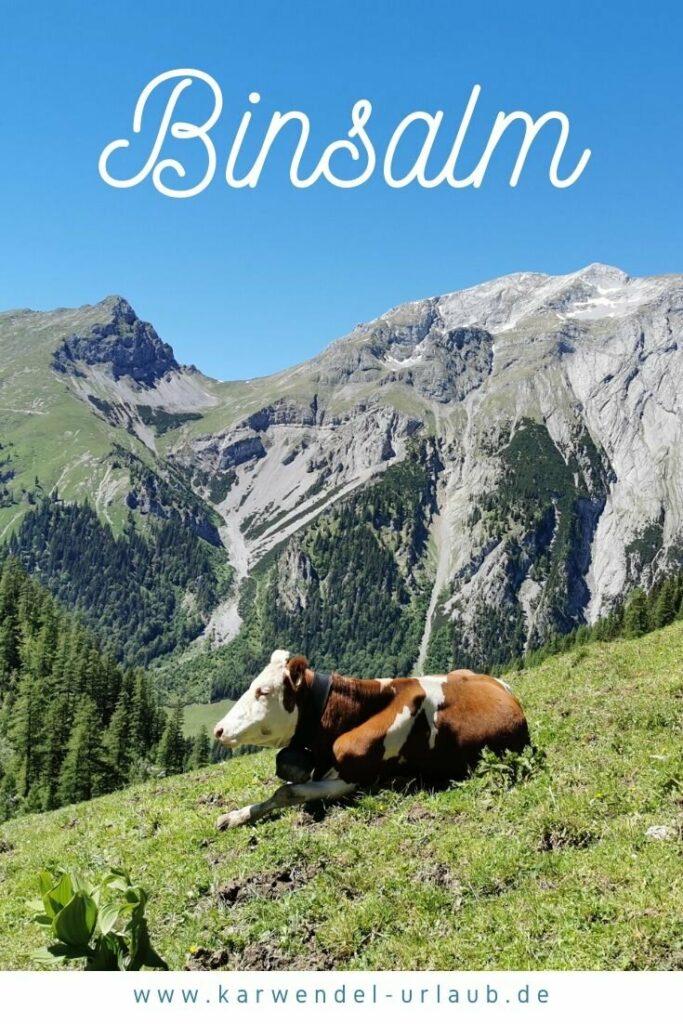 Auf der Binsalm weiden noch Kühe