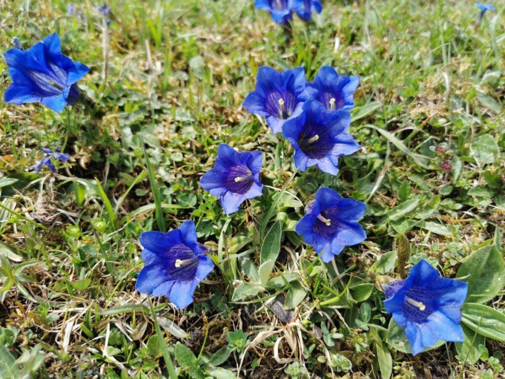 Frühlingsurlaub - mit der Rofanseilbahn zum blauen Enzian