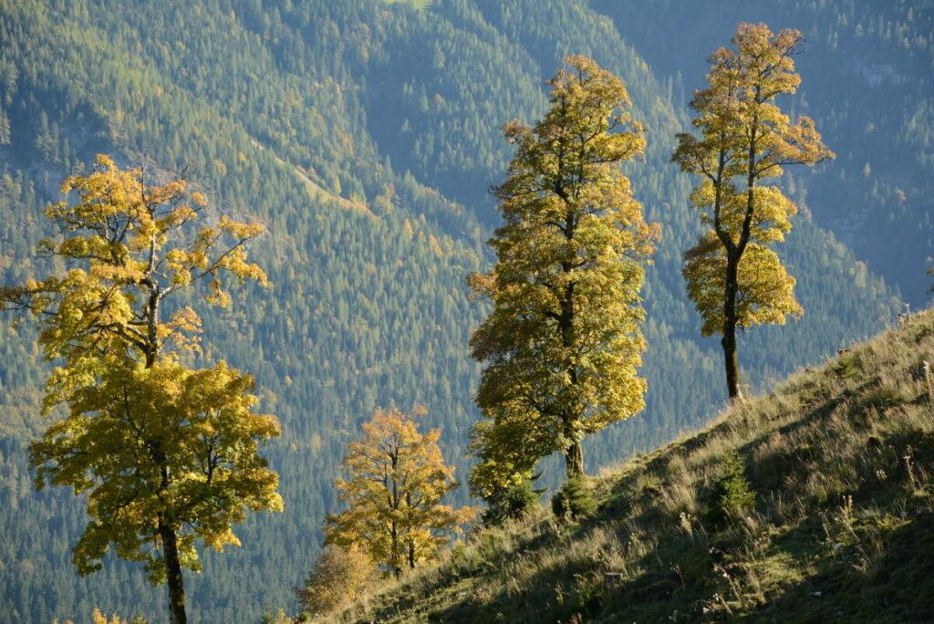 Die Herbstfärbung am Feilkopf