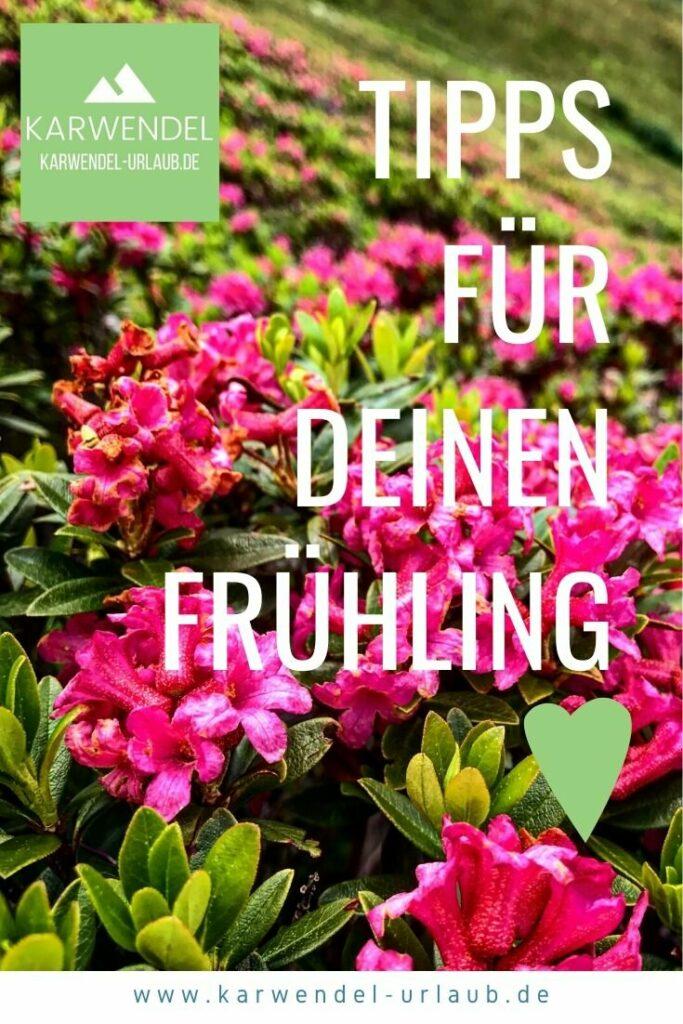 Diese NATURWUNDER musst du einmal selbst im Frühling beobachten! Von den schönsten Wasserfällen bis zur Almrosenblüte :-) #frühling Frühlingsurlaub erleben