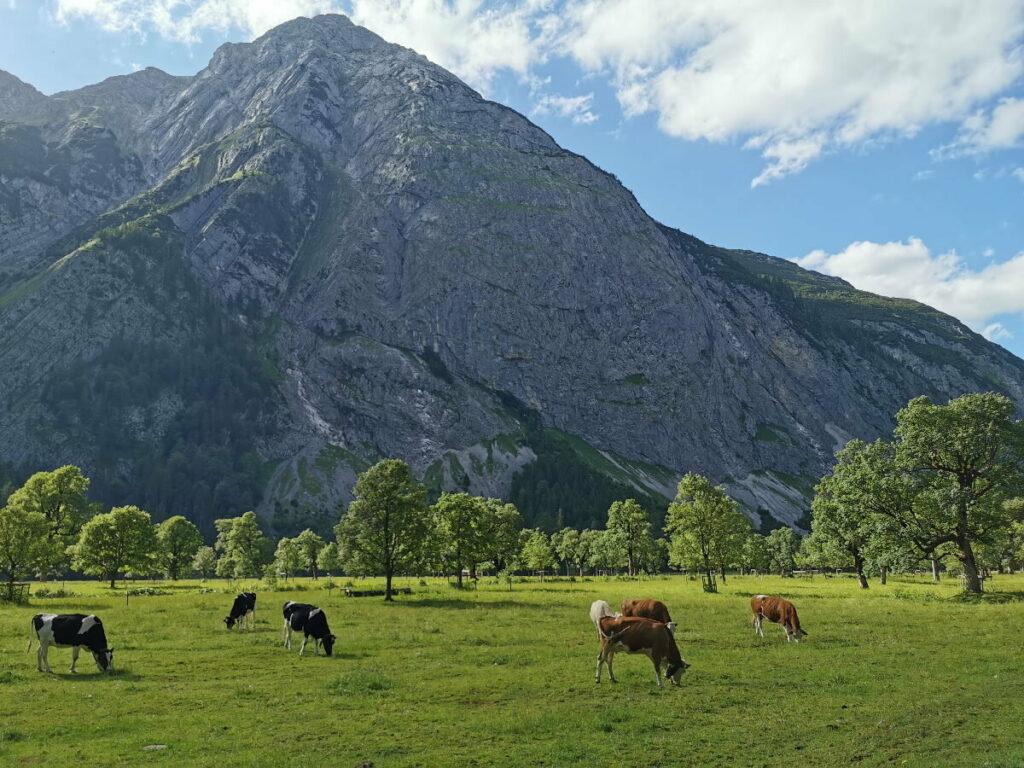 Abendstimmung im Karwendel - Großer Ahornboden