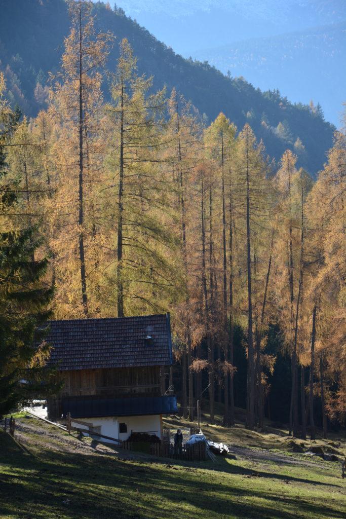 Herbstwanderung in Tirol: Die brennenden Lärchen beim Hörbstenboden Zirl