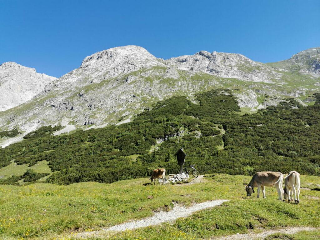 Am Hochalmsattel grasen die Kühe im Sommer