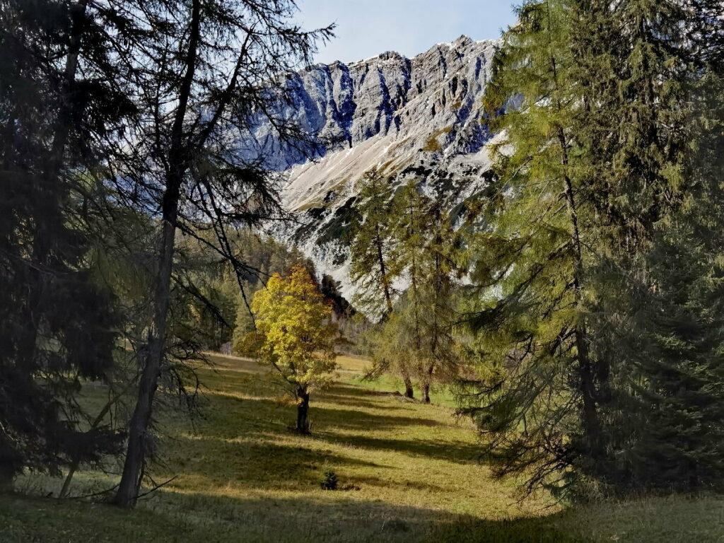 Über den Hirschbadsteig kommst du zuerst zu dieser Lichtung mit dem einzelnen Bergahorn