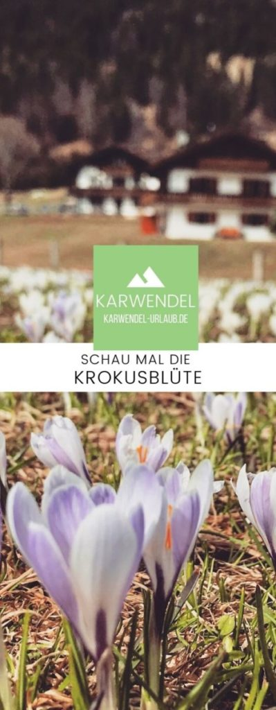 Krokusblüte Geroldsee merken - mit dem Pin auf Pinterest