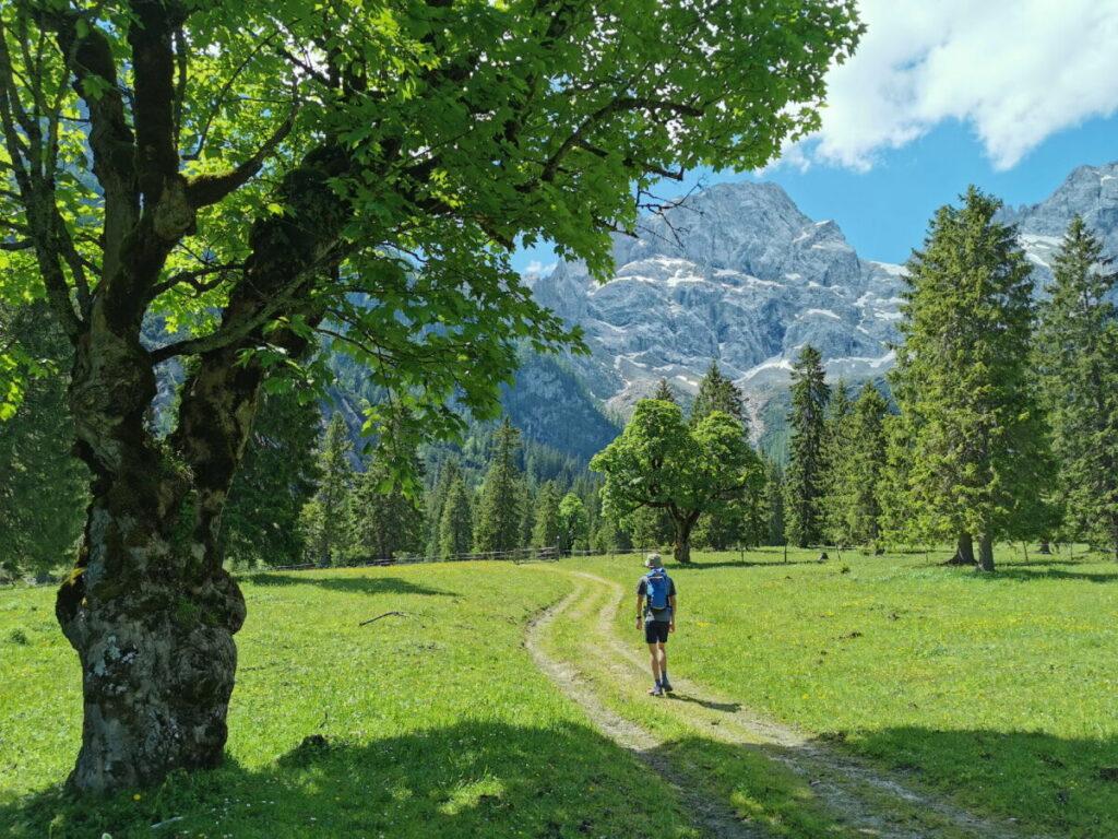 Über den Almboden wandern, mit Blick auf die Östliche Karwendelspitze