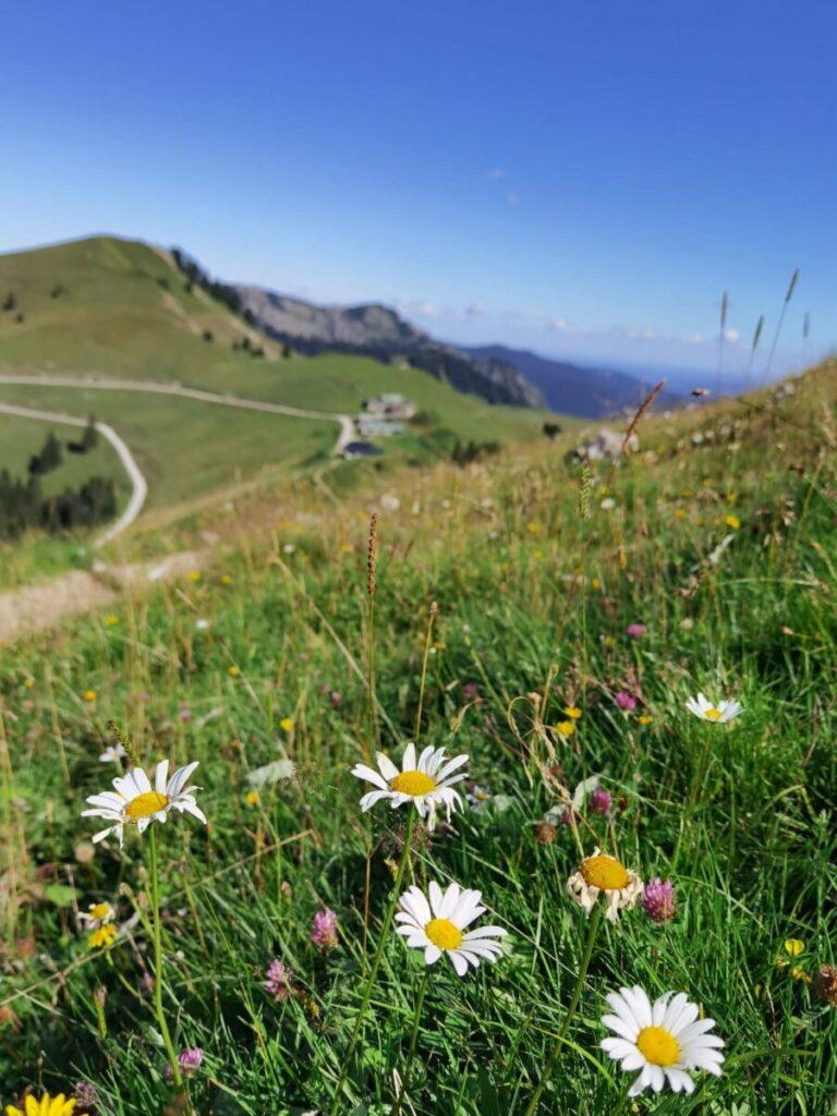 Über die Almwiese um den Roßstein Richtung Tegernseer Hütte wandern