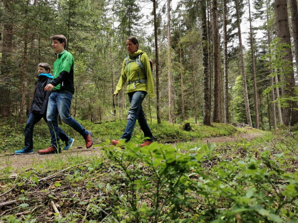 Unsere Seefeld Bodenalm Wanderung - es geht durch den Wald