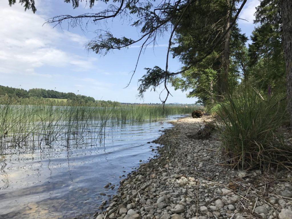 Im Staffelsee baden am Naturbadestrand