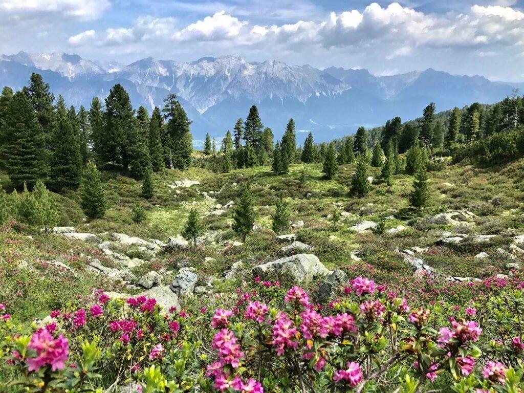 Fantastische wandern auf dem Zirbenweg in den Tuxer Alpen