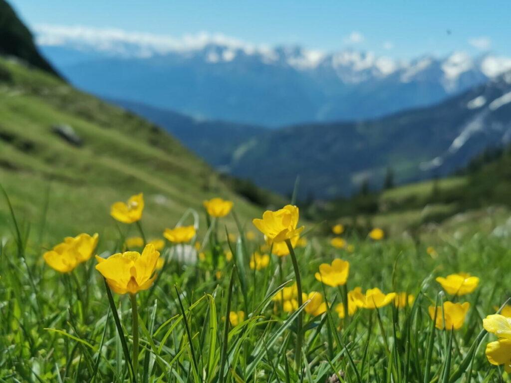 Der Blick über die Almwiesen in Richtung Stubaier Alpen